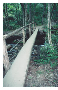 Mt. Leconte Log Foot Bridge
